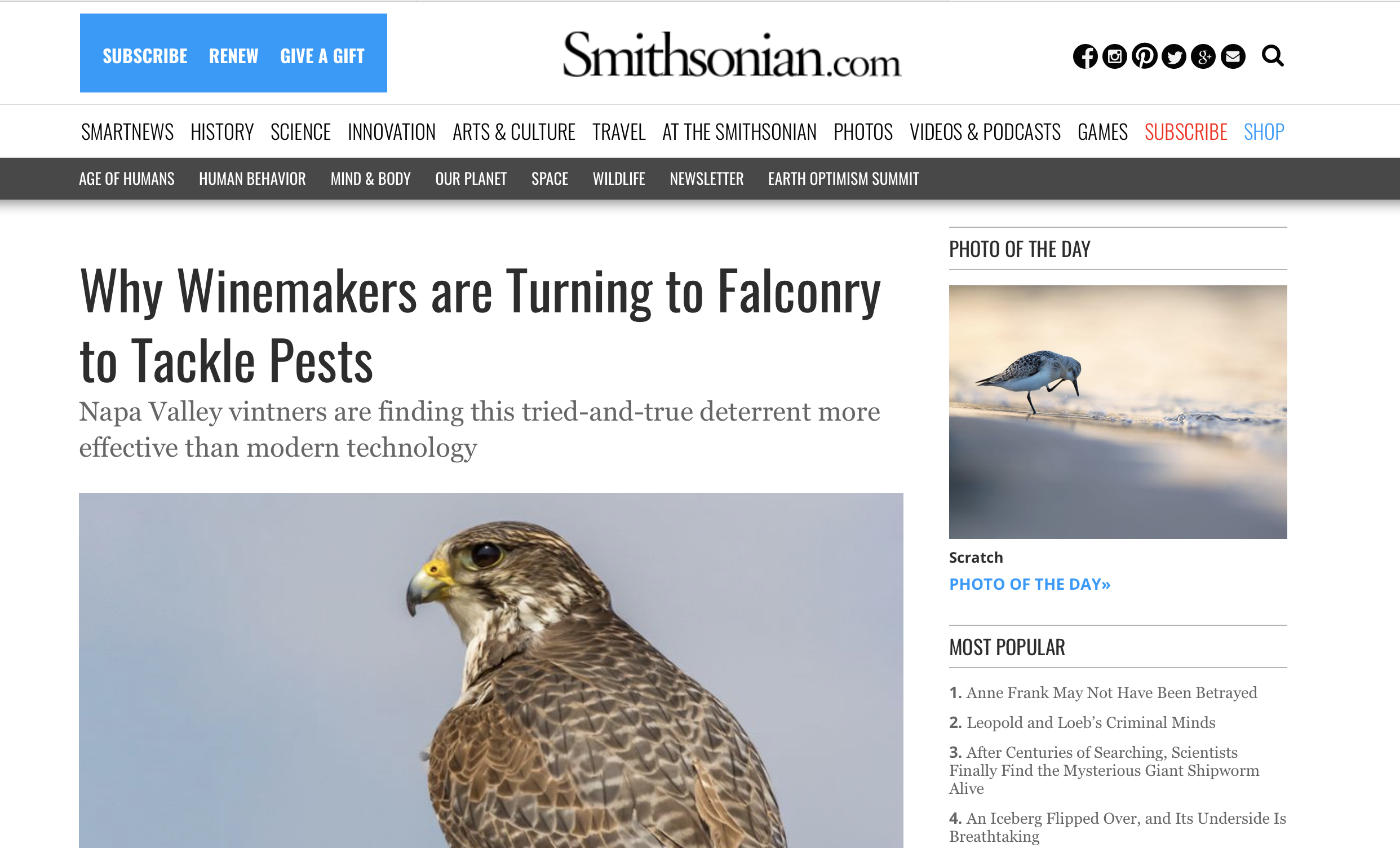 Smithsonian article about bird control
