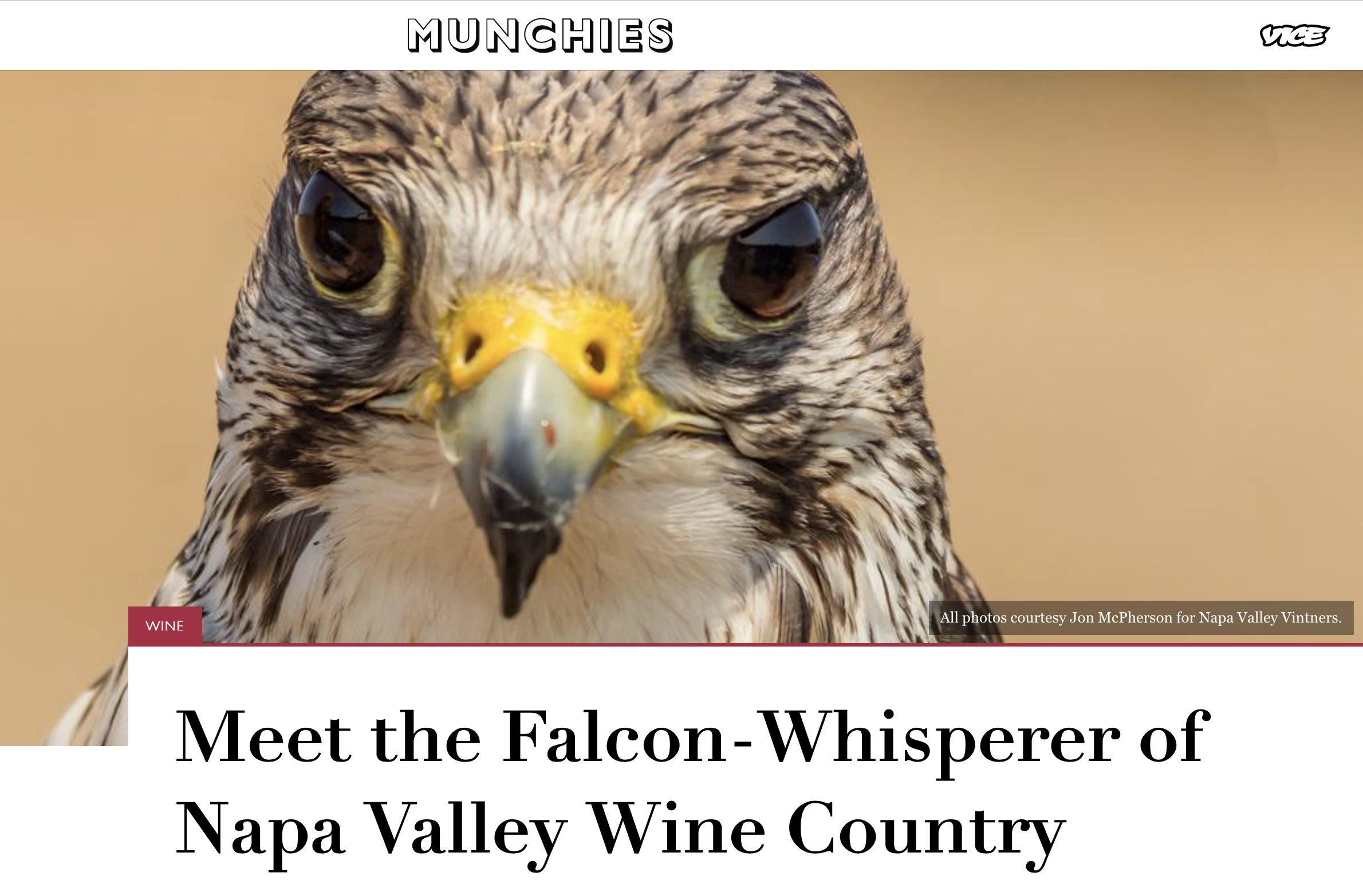 news article 5 falconry
