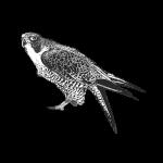 cropped 0611.AM Bird Silo 512 px 1