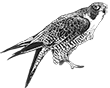 bird control logo lh