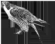 bird control logo rh